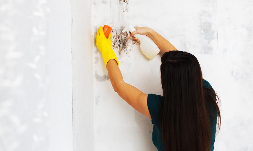 guide till mögelborttagning i hemmet